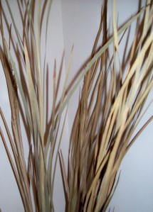 Dried Florals - Sea Oats
